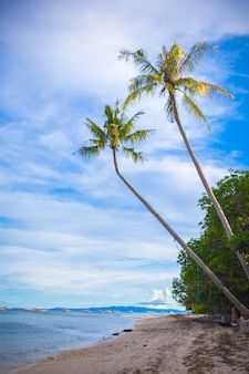 Palm tree on the sandy beach in philippines