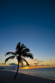 Palm tree on the shore near the beach with a beautiful sky
