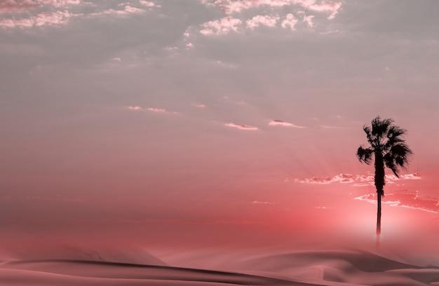 Силуэт пальмы на африканском закате
