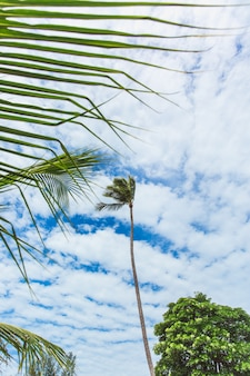 Palm tree in a strong wind with clouds on background