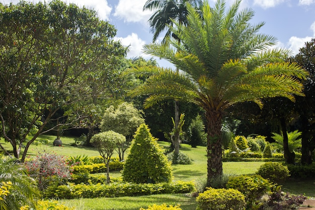 Palm tree in tropical garden