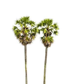 白い背景と椰子の木