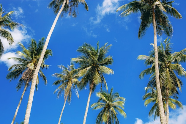 Palm tree with beautiful of blue sky.