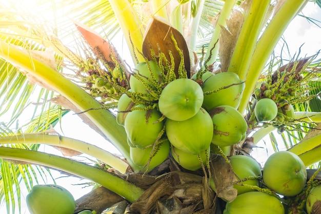 Пальмы с кокосами