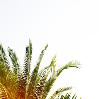 Palm tree with copy space