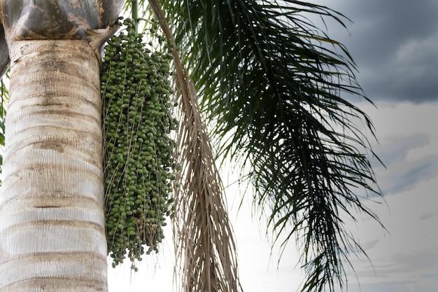 春と夏に緑のデータを持つヤシの木