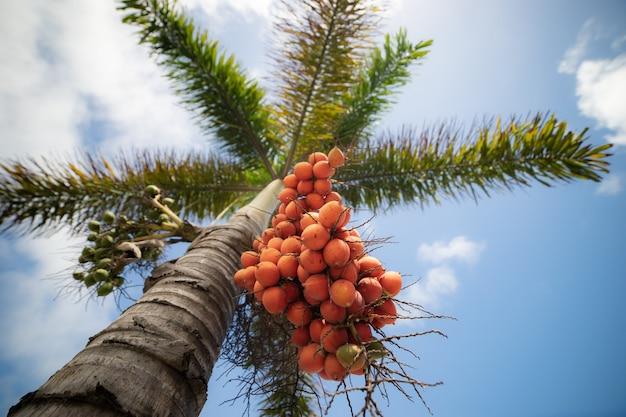 床から上の赤い果実の透視図とヤシの木。