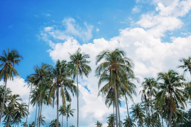 昼間は空とヤシの木。