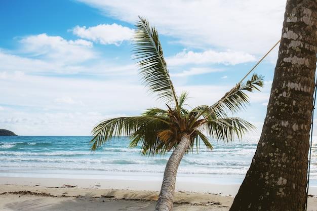Palm tree with sky.