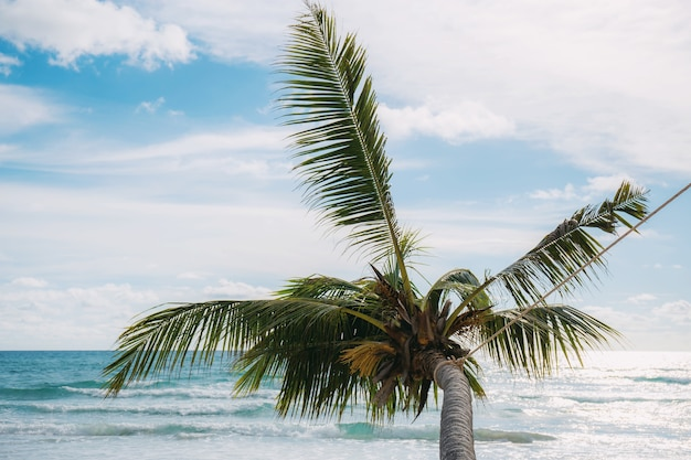 Palm tree with the sky.