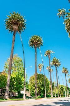 カリフォルニアの青空にヤシの木
