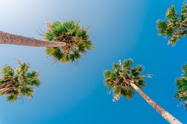 青空に映えるヤシの木