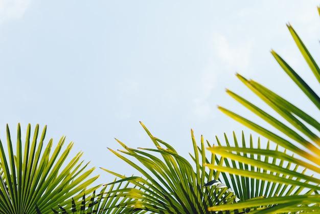 푸른 하늘을 배경으로 하는 야자수, 열대 해안의 야자수, 빈티지 톤 및 양식화된 코코넛 나무, 여름 나무, 복고풍