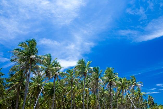 Пальмы против голубого неба, пальмы на тропическом побережье