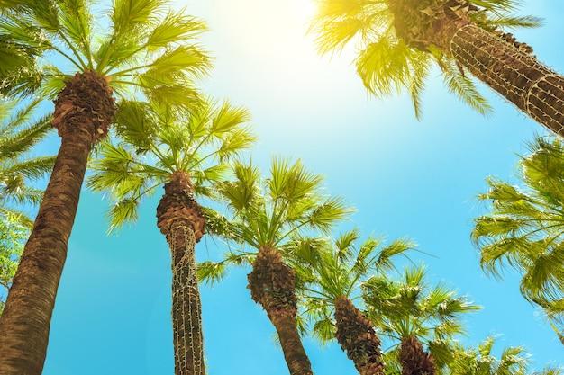 Пальмы против голубого неба. летний фон