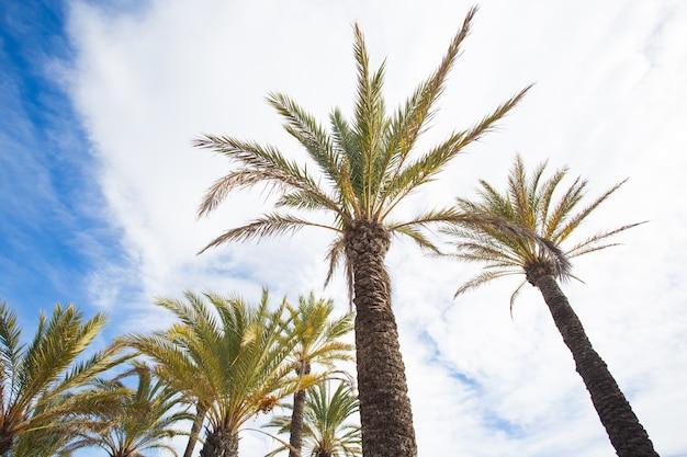 Пальмы против голубого неба.