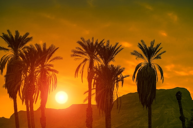 日没時の山に対するヤシの木