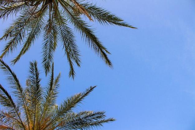 青い空を背景のヤシの木。底面図