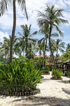 Palm trees againts sky on tropical island.