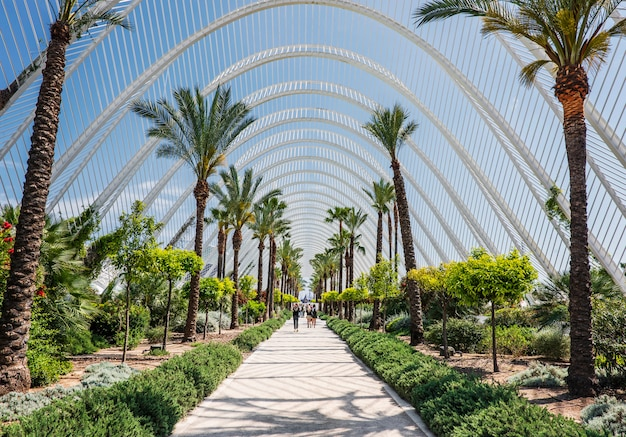 Palm trees alley in valencia, spain