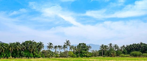 ヤシの木と青い空の草、山。高品質の写真