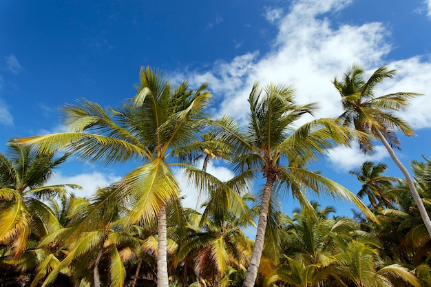 Пальмы и голубое небо на карибском пляже