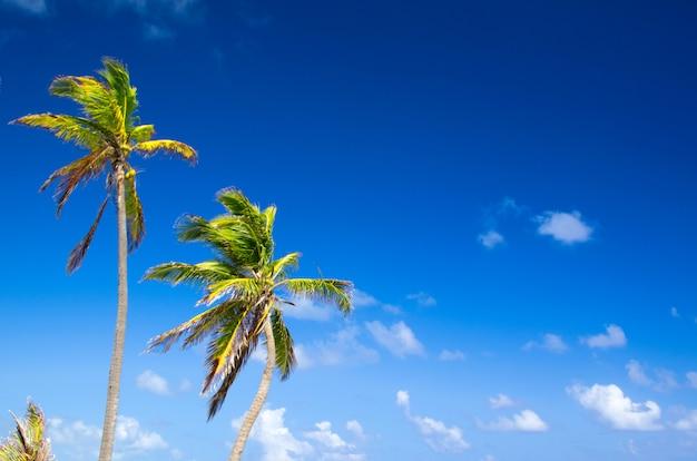 ヤシの木と青い空