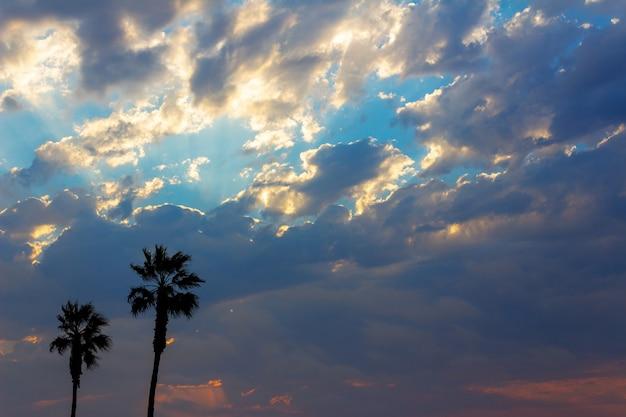Пальмы и красочное небо с драматическим небом