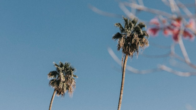 夏の空のヤシの木と花