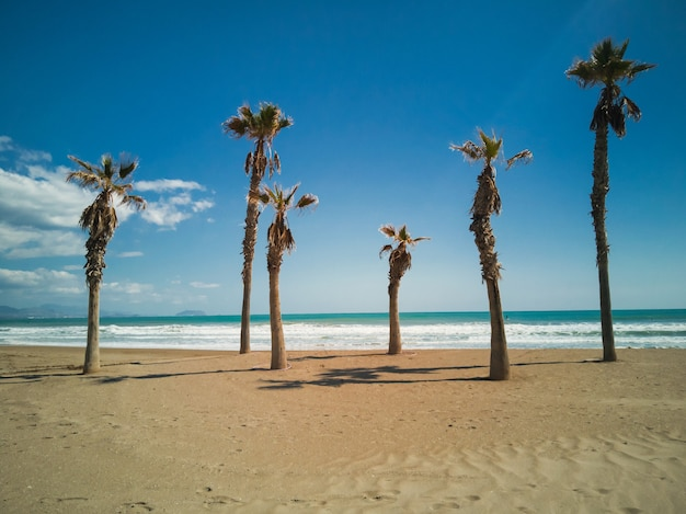 Palm trees in the beach in a suny day in alicante