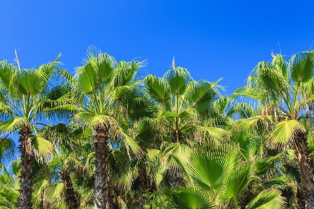 야자수 아름다운 열대 배경