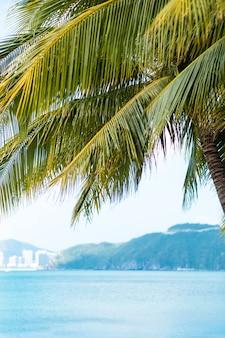 ヤシの木の枝と青い空、晴れた夏の日のターコイズブルーの海水