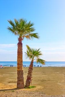 海辺のリゾートの砂浜の海沿いのヤシの木