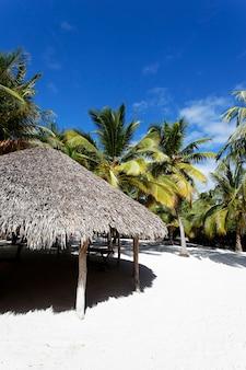 Palme in spiaggia caraibica