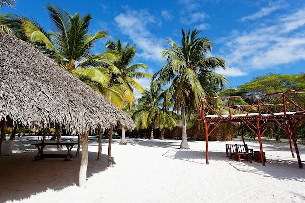 Palm trees in caribbean beach