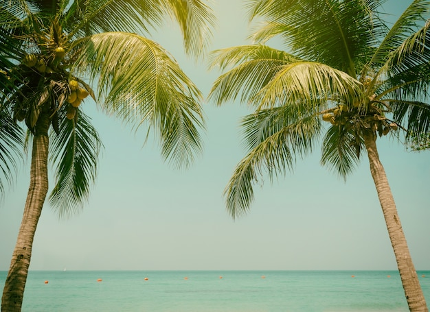 Palm trees coconut beach sea sky in the summer of the holiday vintage toned