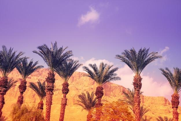 夕暮れ時の砂漠にヤシの木立