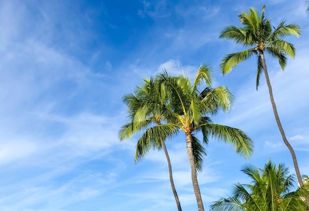 ハワイのヤシの木。