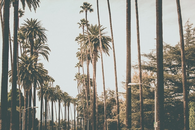 Пальмы в лос-анджелесе