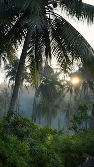 島の朝の霧のヤシの木
