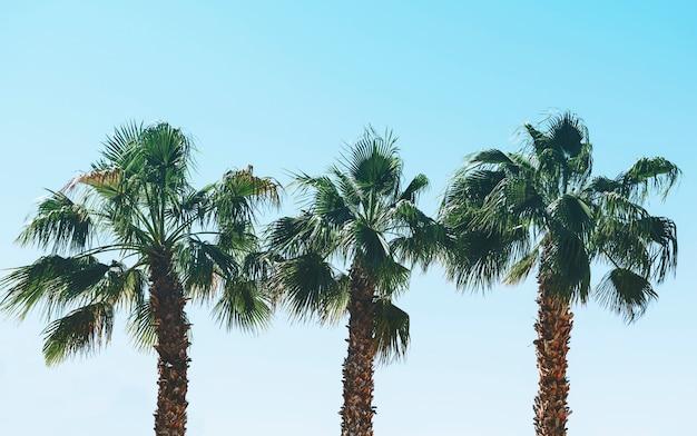 Пальмы летом