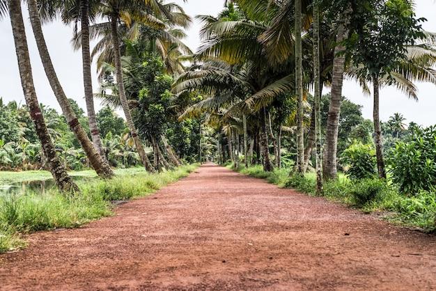 Пальмы керала индия