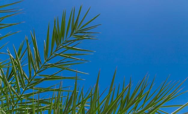 Листья пальмовых деревьев на фоне неба. выборочный фокус. природа.
