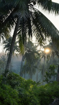 Palm trees in the morning fog on the island