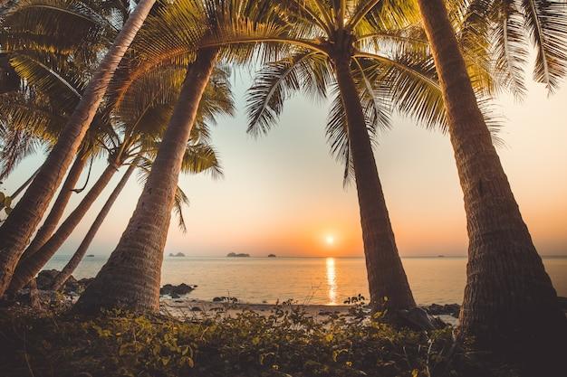 Palm trees, ocean. sunset landscape, bali.