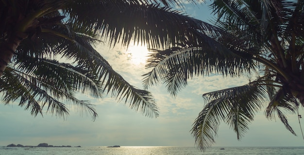 Palm trees and ocean at sunset in sri lanka.