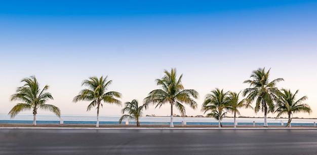 熱帯の場所で青い空を背景に高速道路の脇にあるヤシの木。メキシコカンペチェ。高品質の写真