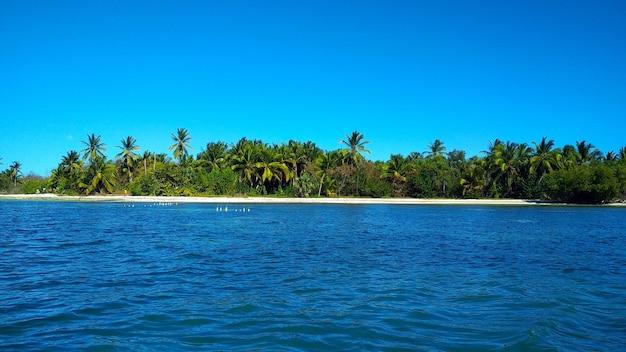 砂浜のヤシの木。ドミニカ共和国