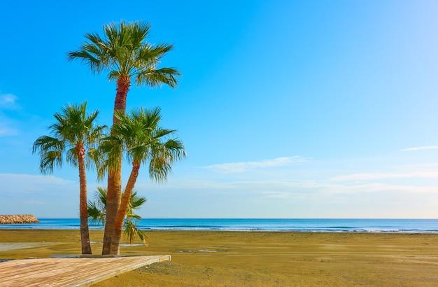 Пальмы на песчаном пляже, ларнака, кипр