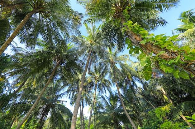 열대 섬의 야자수
